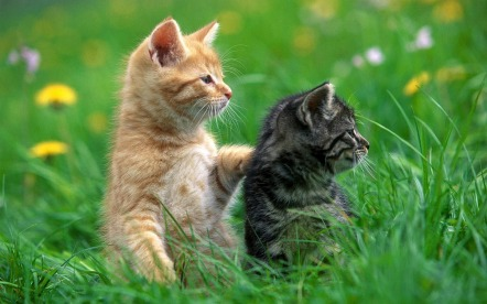 0d16a-hd-cats-wallpaper-with-two-cats-in-the-grass-cats-wallpapers