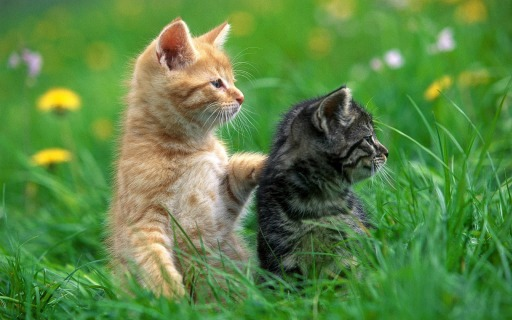 Image result for cats in grass