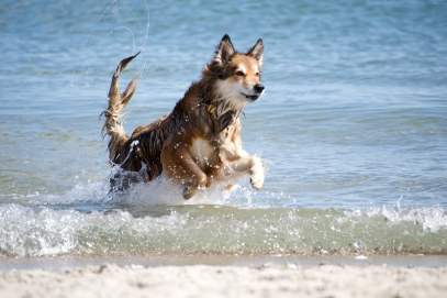 Image result for dogs frolicking