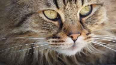 cat-portrait-kitten-cute-128884.jpeg